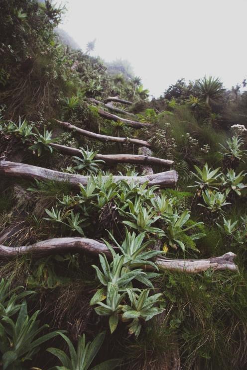Mt. Sabyinyo, Mgahinga Gorilla National Park, Uganda